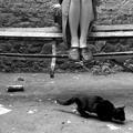 ...Кошка под дождем...