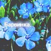 Барвинка.