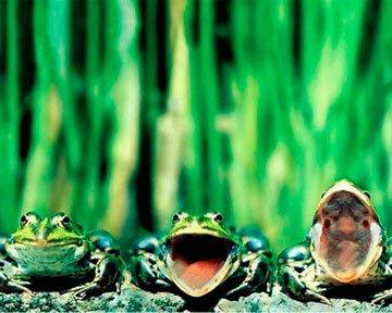 oblivion дневники асоциальная сеть контрольная по экономическому анализу сдано отчет по практике курсовая за прошлый семестр огромная разжмревшая от времени жаба cдано на отлично