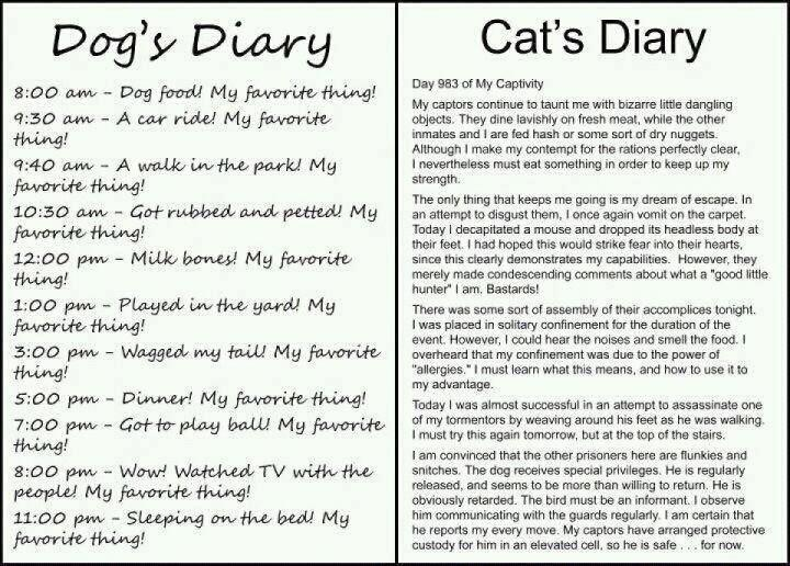 five paragraph essay cats and dogs Essay on cat dog essay on cat dog in the final paragraph cats and dogs essay cats and dogs the most popular pets in today's homes are cats and dogs.