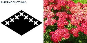 http://static.diary.ru/userdir/1/0/4/1/1041948/38849138.jpg