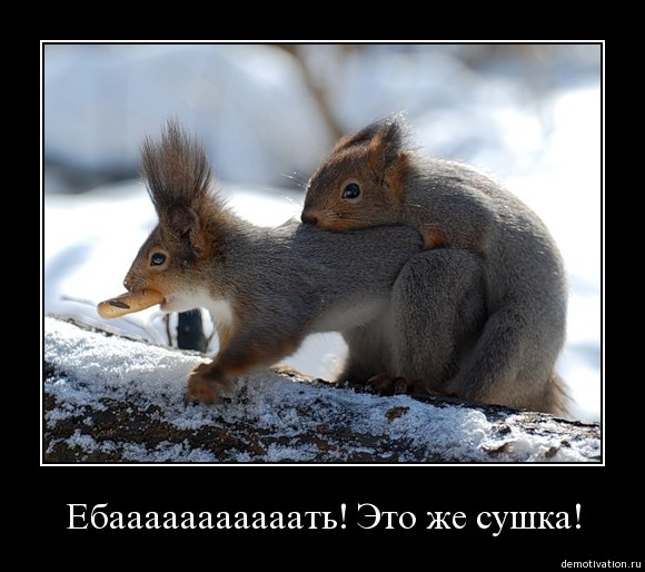 http://static.diary.ru/userdir/1/0/4/9/104976/53179503.jpg