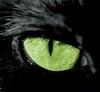 Зеленоглазый дьяволенок