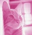 Малиновая кошка