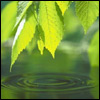 зеленый_мир