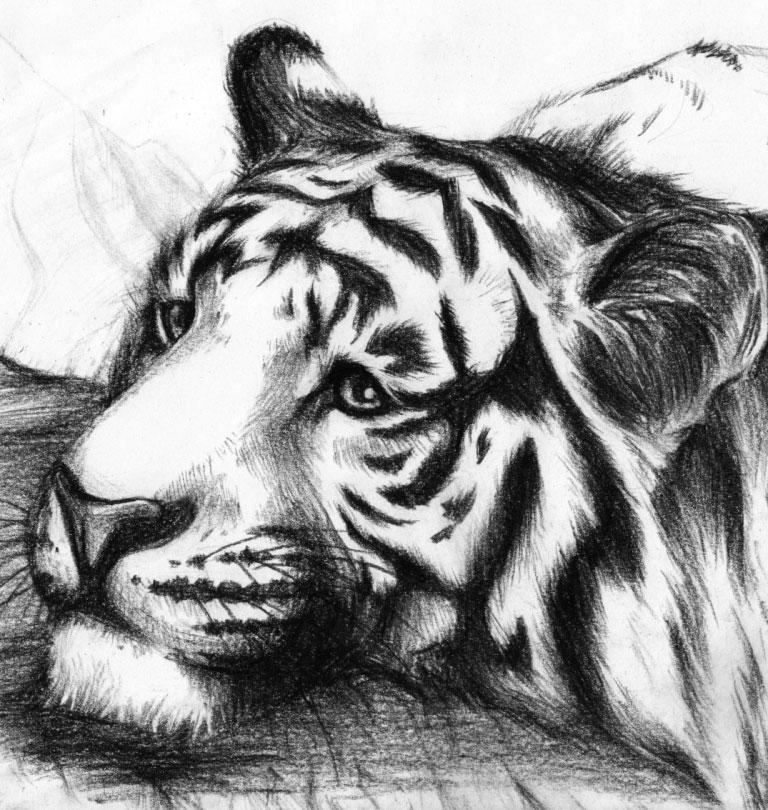 Выжигания картинки тигра