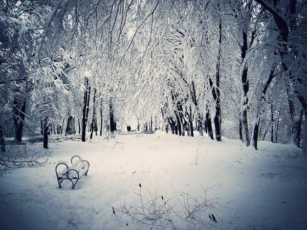 Вы любите зиму? 34410589