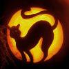 _4erry-cat