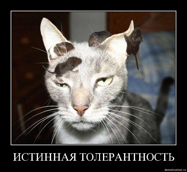 http://static.diary.ru/userdir/1/1/0/7/1107034/40303306.jpg