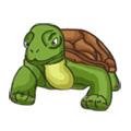 Turtle2307