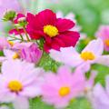 ~Bloom~