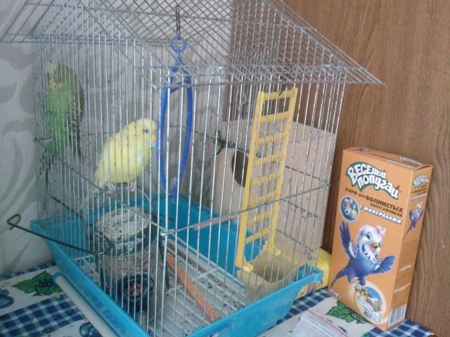 Гнездо для попугаев волнистых своими руками фото