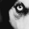 Волчьи объятия