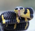 НагАйна *змея подколодная*