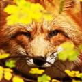 Пятнистая Лисица