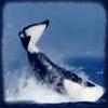 Skana The Orca