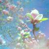 на розовом облаке мечты;