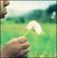 little dandelion