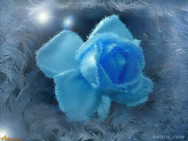 Фото синие цветы в инее 170