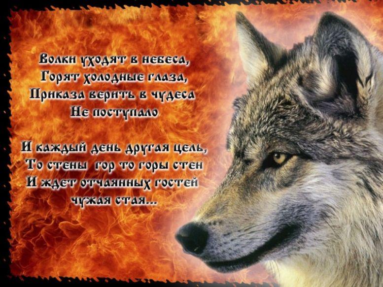 Открытки с волками все