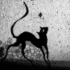Кошка закатная