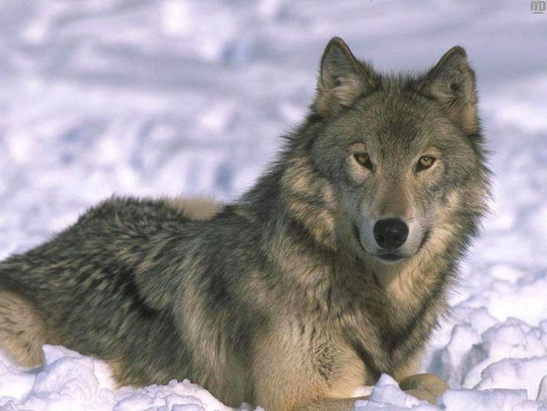 Волков бояцца фото приколы