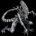 triceratrops