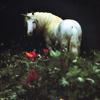Просмотров: 789.  Единорог в поле.  Мифические лошади (фэнтези).  5. Мне нравится.