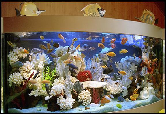 Нарисовать рыбок в аквариуме поэтапно