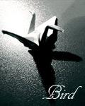 Одинокая птица