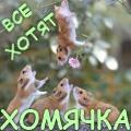 Крицетул Барабинский
