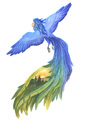 Птицекот