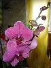 Орхидейка... июнь 2006 подарок к дню Медика