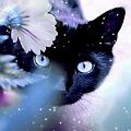 Dreaming_Cat
