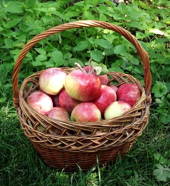 Подарки на яблочный спас 3