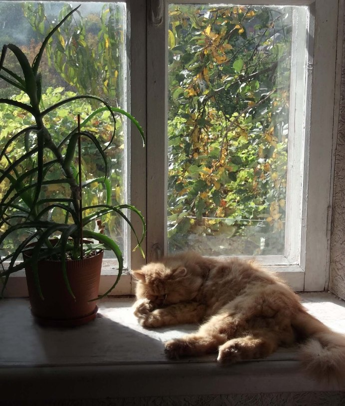 Кот на окне стих