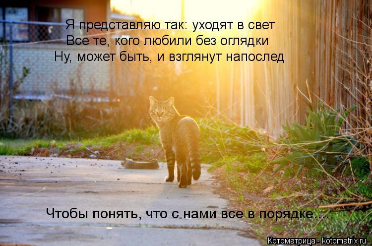 Умирающая кошка стих