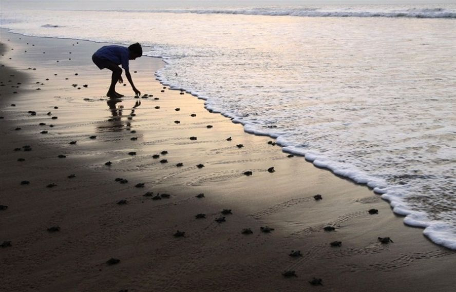 размеры: приснилось что я иду по берегу Только личный