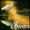 Сандра.