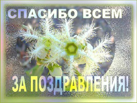 http://static.diary.ru/userdir/1/4/9/3/149333/15203015.jpg