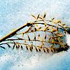 птенец бабочки-крылатки