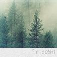 Дикий лесной эльф Лас