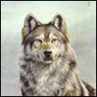 Grey_wolf(she)