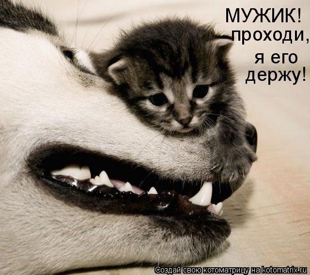 http://static.diary.ru/userdir/1/5/4/3/154392/43772581.jpg