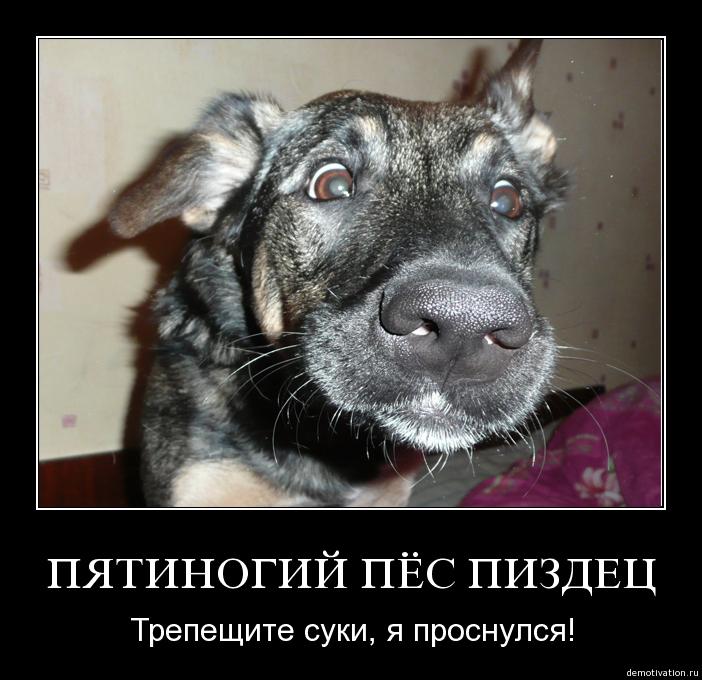 Пес пиздец с пятью лапами