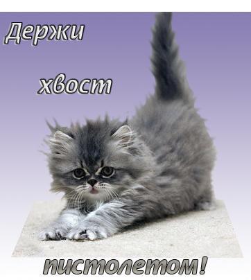 Анимация Кошки.