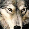Волчонок~