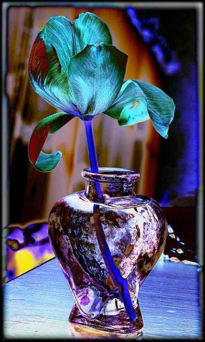 Каменный цветок цветка