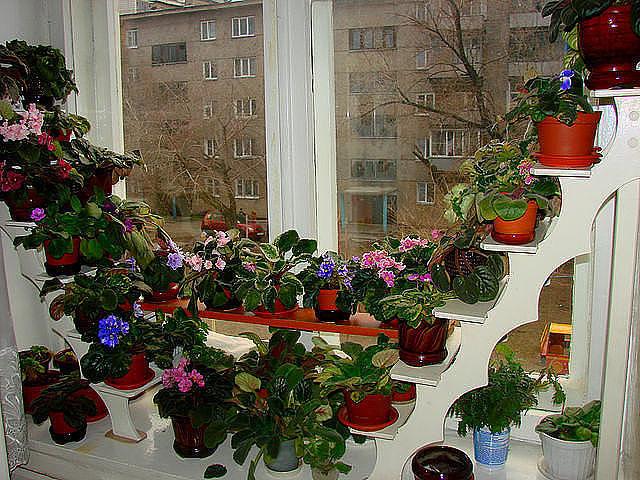 Для цветов и растений планета