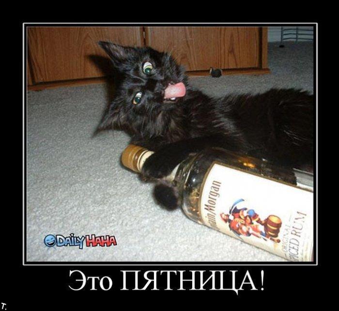http://static.diary.ru/userdir/1/6/2/4/162493/53217344.jpg